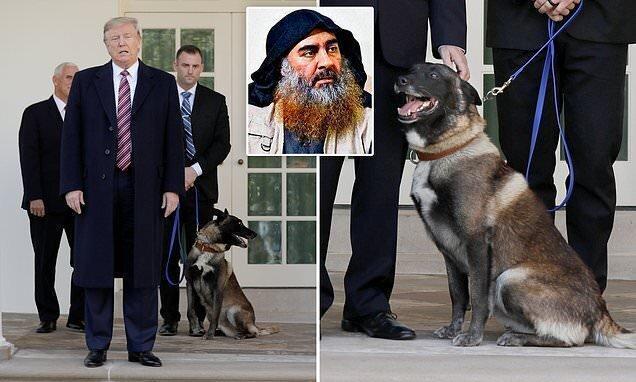 تصاویر ، ترامپ ول کن این سگ نیست!