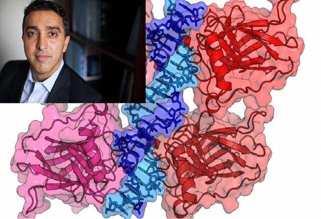 تلاش دانشمند ایرانی برای درمان سرطان با کمک نانوذرات