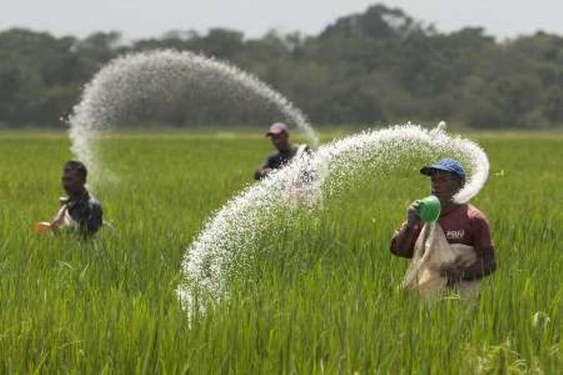 خبرنگاران رییس جهاد کشاورزی بیجار: کمبود کود نداریم