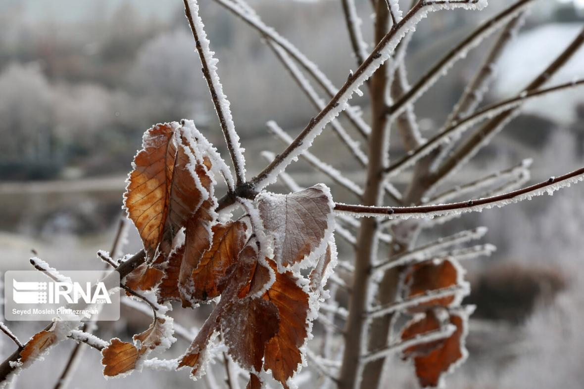 خبرنگاران رویش مجدد باغ های سرمازده خراسان شمالی