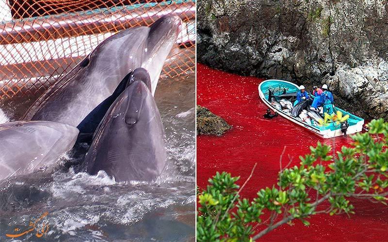 داستان تلخ کشتار دلفین ها در تایجی ژاپن