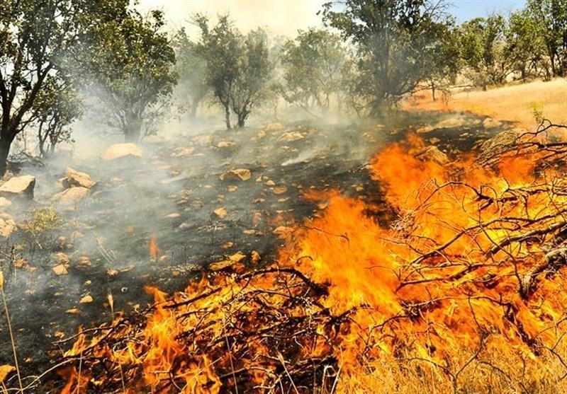 سوختن درختان بلوط جنگل های کهگیلویه و بویراحمد در آتش